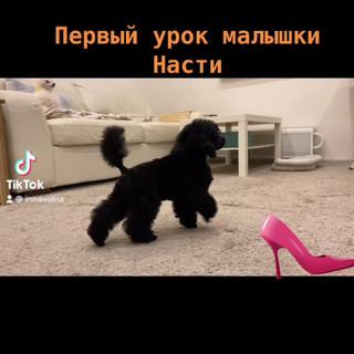 FinalVideo_1611123259.187200.mov