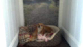 Indi Resting in her bed at Dog Time Stay & Play