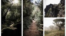 Madeira - Meeresrauschen meets Bergpanorama