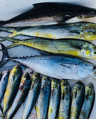 Outer Banks Inshore Fishing Charters - Full Day