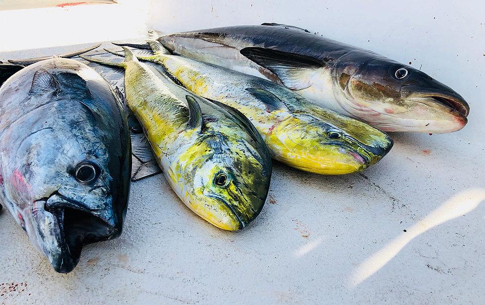 OBX Inshore Fishing Charters