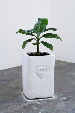 Oh he's doing splendidly, 2017, Ytong and Bannana plant, 100x40x35