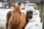 Horses at Ryess Farm