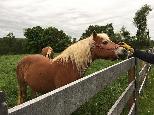 Horse at Ryerss Farm