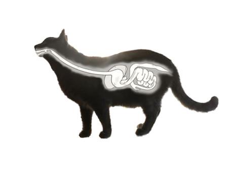 Kattens fordøyelses systemet i et nøtteskall