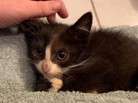 Hva er kattepest og hvordan beskytter vi kattene våres mot dette?