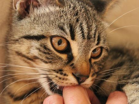 8 fakta om kattens største organ. Lær hvorfor katter er så følsomme for berøring.