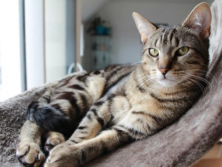 Informasjon om hold av katt alle katteeiere må kunne! Så har du katt burde du lese dette!