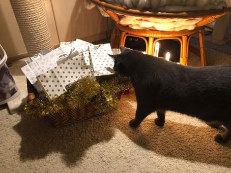 DIY Julekalendere for Katt.                           Lett og morsomt å lage både for katten og deg.