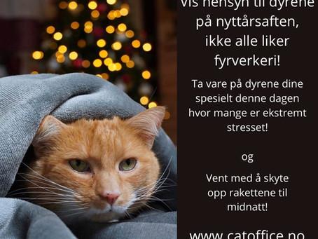 Er din katt redd fyrverkeri på nyttårsaften? Da må du lese dette og allerede nå begynne å trene!