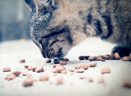 Kattemat 101. Del 1: Lær hva som er i maten vi gir til kattene våres og forskjellen på fôrtyper.