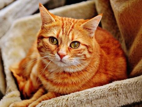 Trenger man å bytte fôr mens katten går fra kattunge til senior katt? (les svaret her)