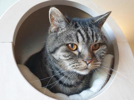 Senior katter og hva man trenger å tenke på når man har en eldre katt i hjemmet.