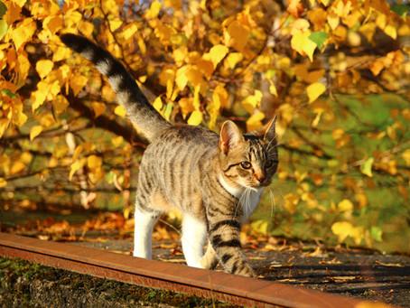 Kattens navigerings- og orienteringsevne. Hvordan fungerer det egentlig?