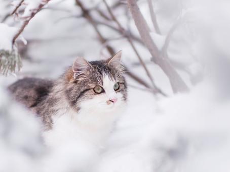 Alt du trenger å vite om katten i kulda og tips til aktivisering av pus i vinter!