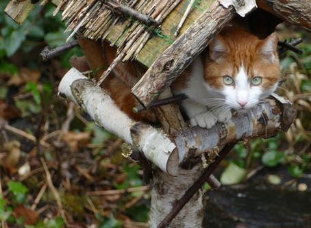 Kattens effekt på Norsk Natur ut i fra forsknings rapporter.