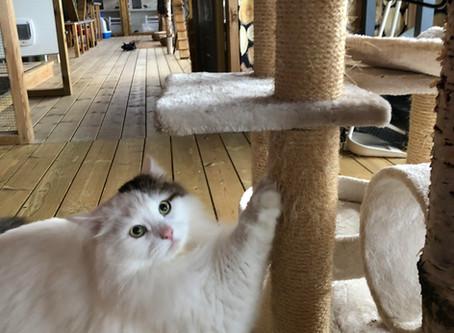Kattedate på Lerud kattepensjonat med Kattens Fremtid i Norge.