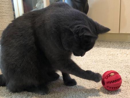 Hjemmekontor eller eksame? Food puzzles som kan holde katten din aktiv mens du jobber.