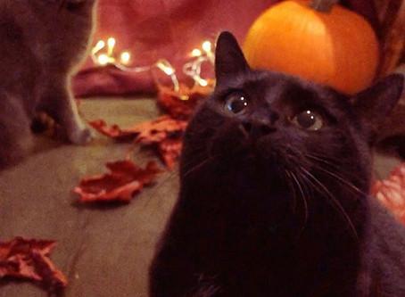 Historien om Sorte Katter, Hekser og Halloween