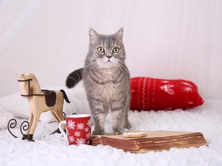 Julen med katt i hus!