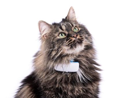GPS hos katt og hvorfor dette kan være den beste investeringen for din utekatt.