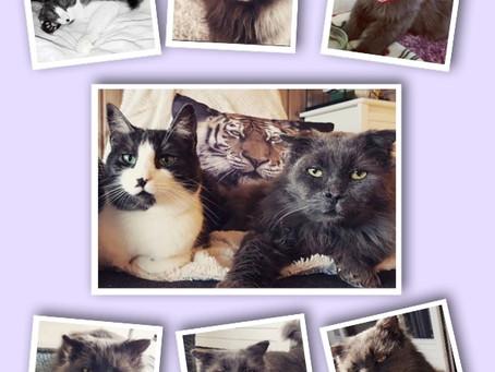 Hva er FIV og kan man leve med en katt med FIV?