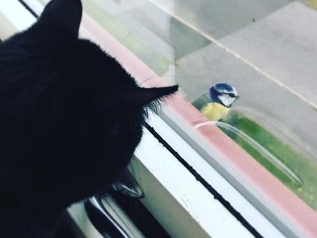 Cat TV, hva er det, hvordan bruker man det og vil katten sette pris på dette?