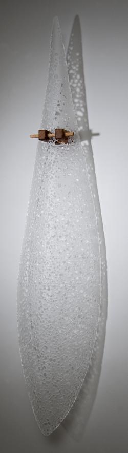 oropendola clara