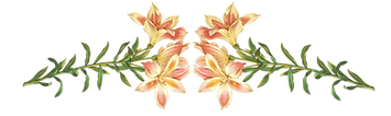 Picture of flowers on organic lip balm for sale page.