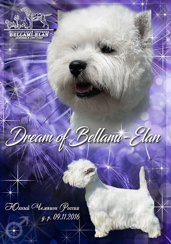 Dream of BE.jpg
