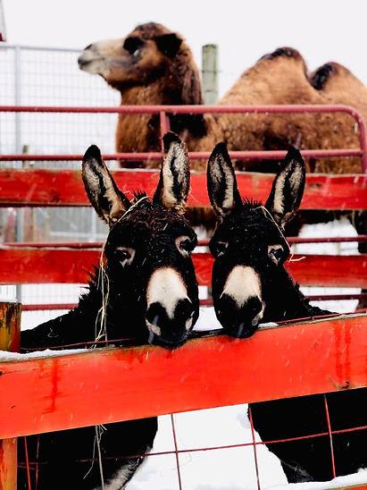 Achoo and Donkeys.jpg