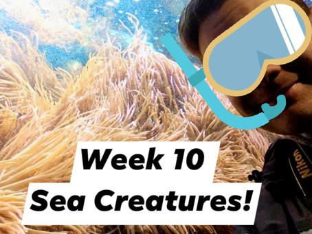 Ranger Stu's Virtual Zoo - Week 10 - Sea Creatures!
