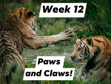 Ranger Stu's Virtual Zoo - Week 12 - Paws and Claws!