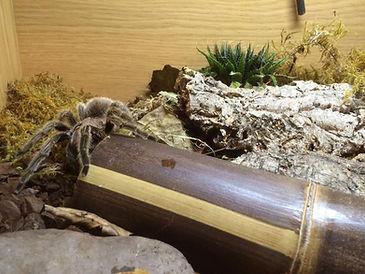 tarantula animal party