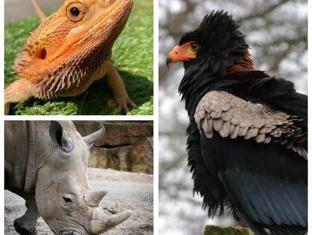 Ranger Stu's Virtual Zoo - Week 7 - Carnivores, Omnivores and Herbivores