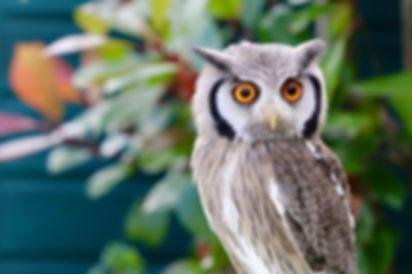 owl animal party