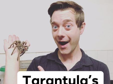 Ranger Stu's Fun Fact Friday - Tarantulas!