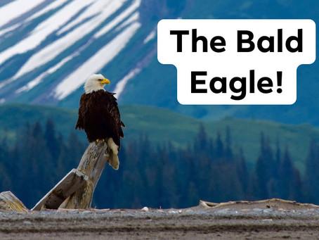 Ranger Stu's Fun Fact Friday - The Bald Eagle