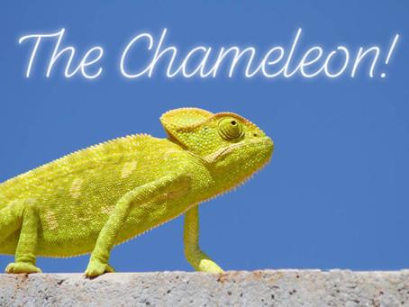 Ranger Stu's Fun Fact Friday - Chameleons!