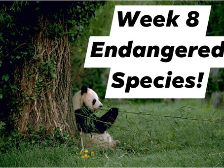 Ranger Stu's Virtual Zoo - Week 8 - Endangered Species!