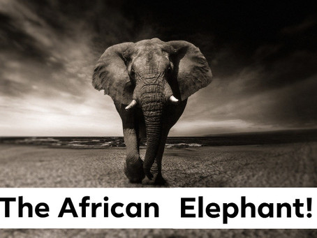Ranger Stu's Fun Fact Friday - Elephants!