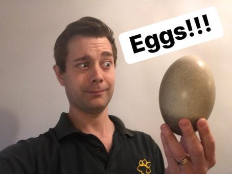 Ranger Stu's Virtual Zoo - Week 3 - Eggs!