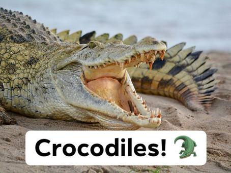 Ranger Stu's Fun Fact Friday - Crocodiles!