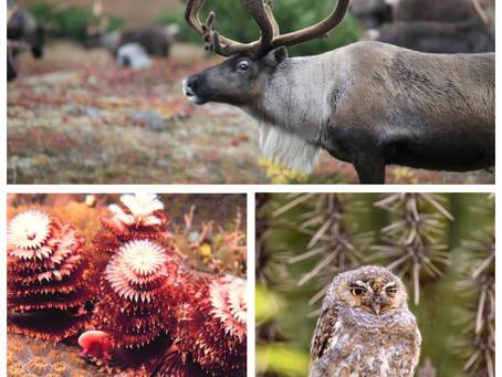 Ranger Stu's Holiday Blog - Part 1 - Christmas Creatures!