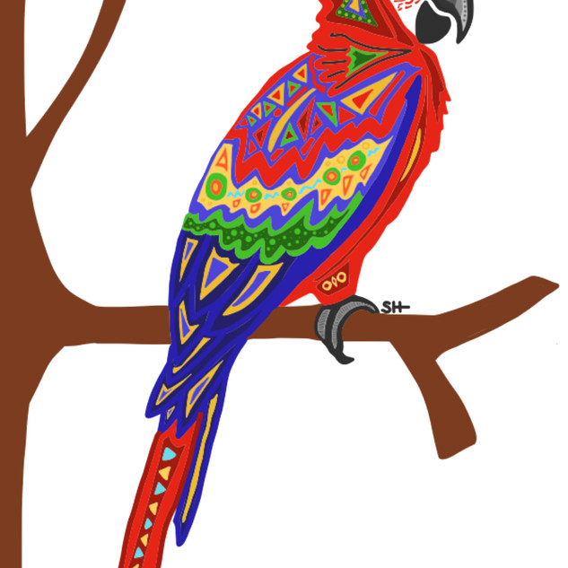 Sarah Hiers Design Parrot Drawing
