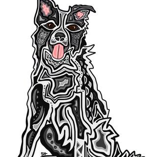 Sarah Hiers Design Custom Pet Art Border Collie Drawing