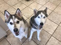 Echo and Yoshi