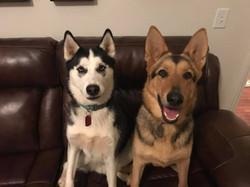 Dakota, now Stitch and Stella