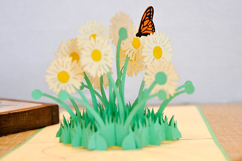 Daisies and Butterfly