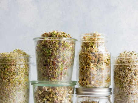 por que germinar grãos?